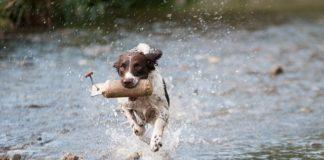 Grünlippmuschel für Hunde Preisvergleich
