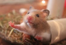 Mehrkammernhaus Hamster